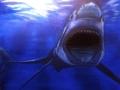 SHARK BY MOONLIGHT